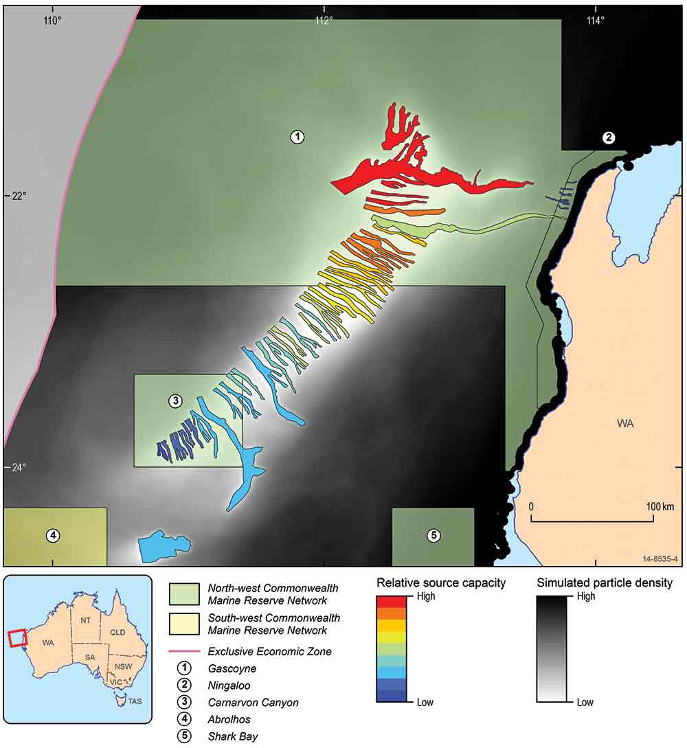Section map of Australia showing marine larvae sources.