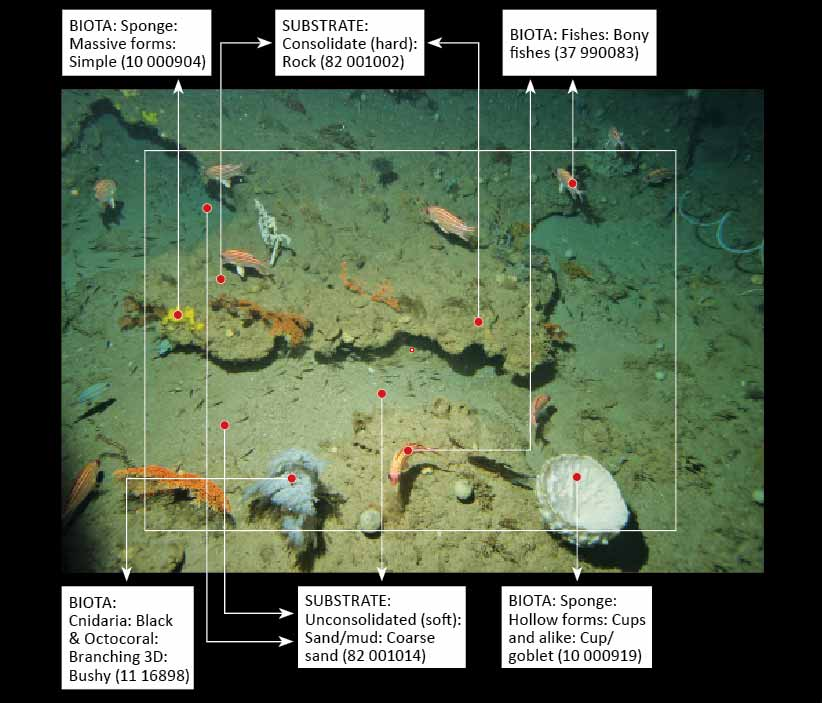 Image of seafloor with taxonomic characteristics identified.