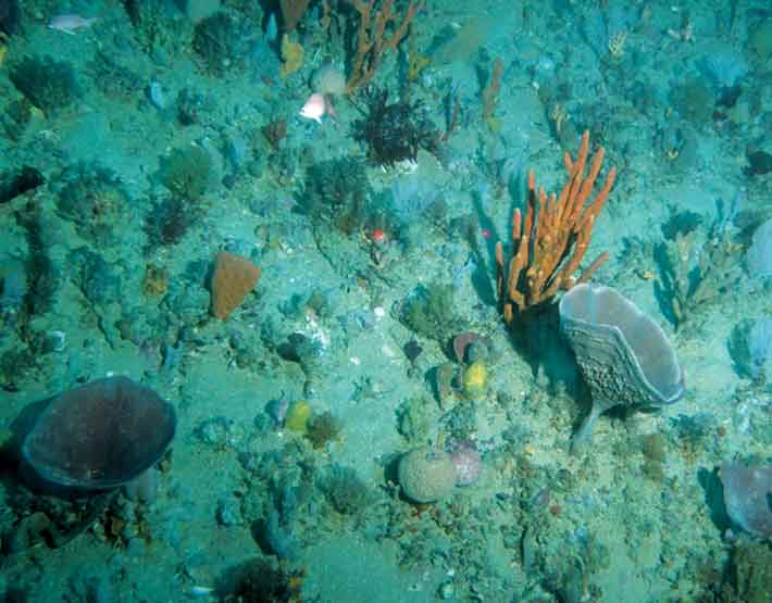 Sponges on the seafloor.