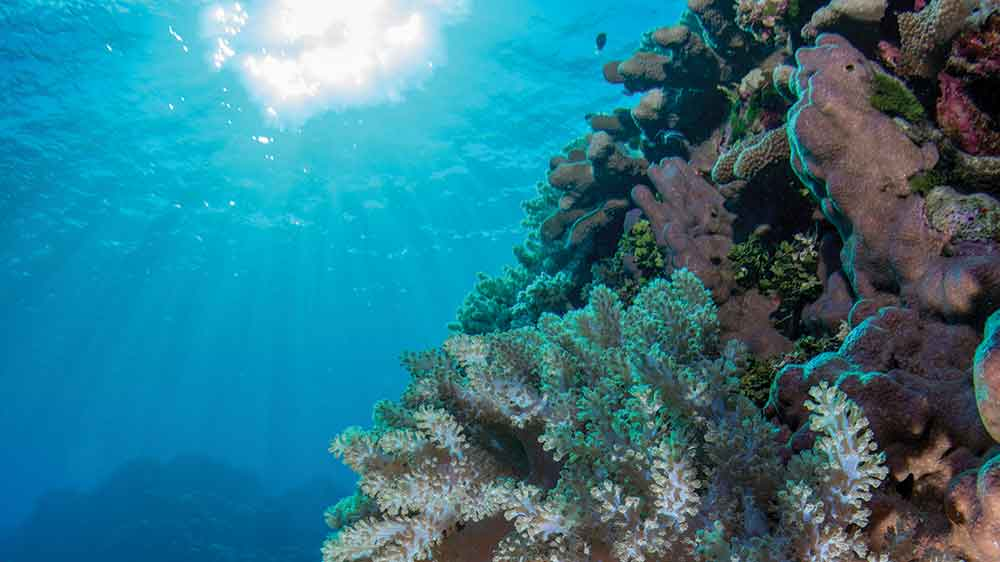Underwater view of coral reef.