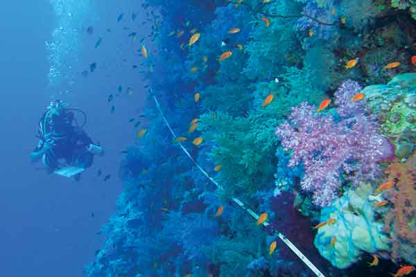 Diver swimming along reef.